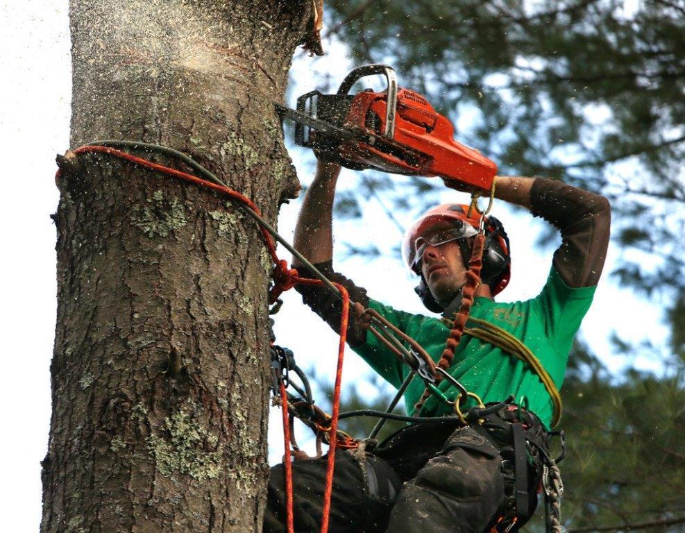 Tree Felling Centurion Prices