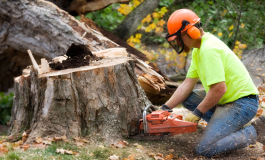 Tree Stump Removal Prices
