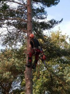 tree trimming pretoria