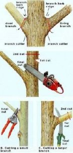 tree-pruning-pretoria