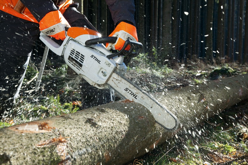 pretoria tree felling
