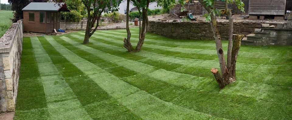 instant lawn pretoria